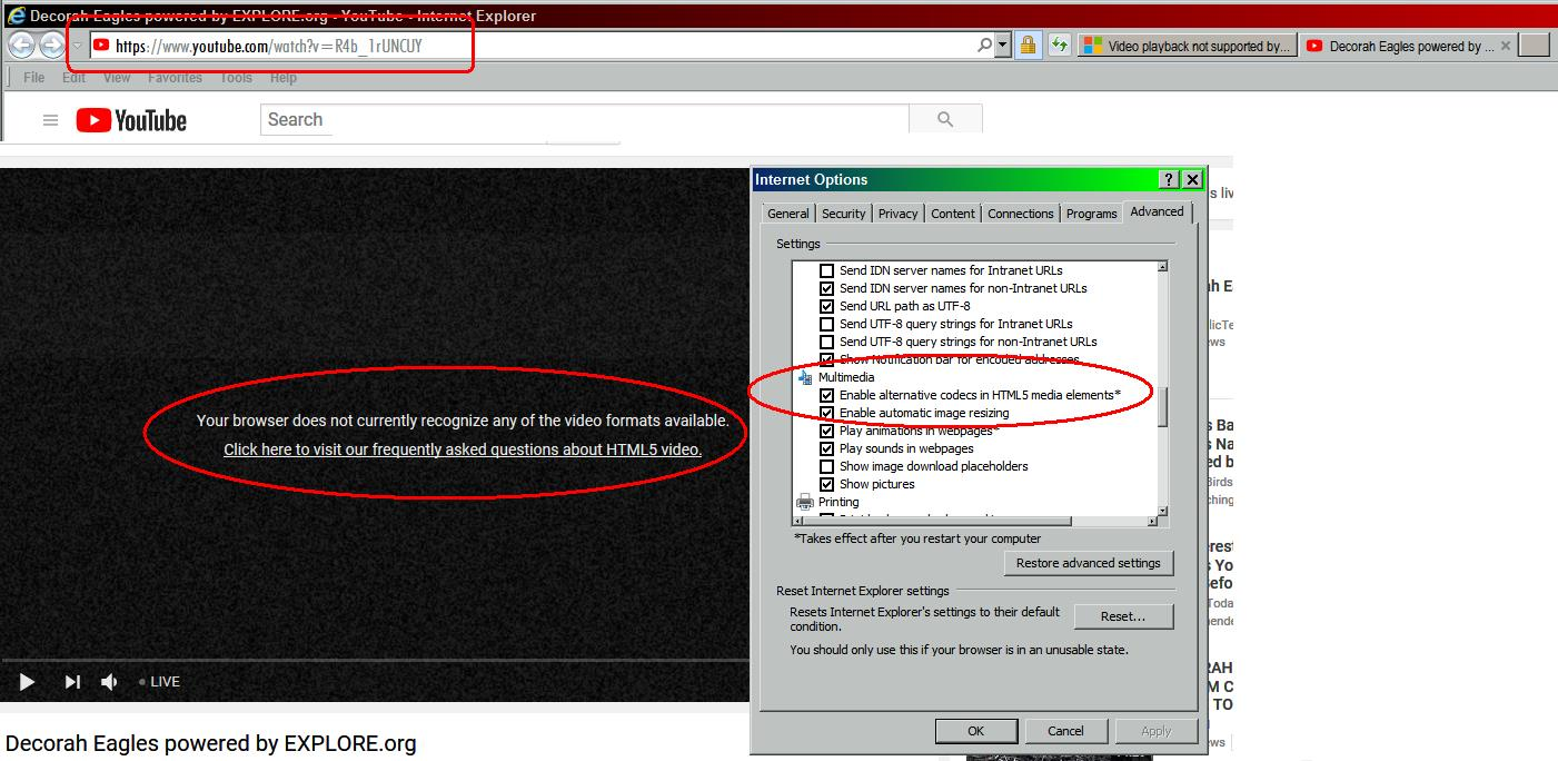Video Playback Not Supported By Your Browser Microsoft Community