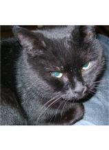 Duncan Cat