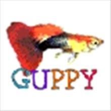 Guppy49