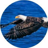 jhon eagle