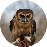 OwlWizard